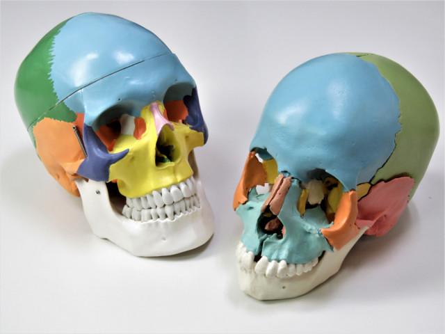 頭痛・首肩こり専門 女性専門 せんだがやカイロプラクティック 頭蓋骨調整 代々木, 新宿, 千駄ヶ谷, 北参道, 国立競技場から徒歩圏内