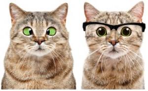 portrait-two-cute-cats-eye-450w-1273379341